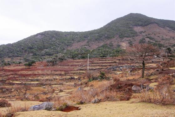 段々畑跡(野崎島)2