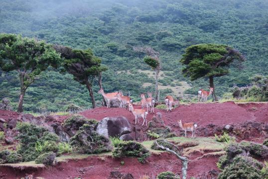 野崎島の風景2