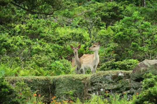 野崎島の風景3