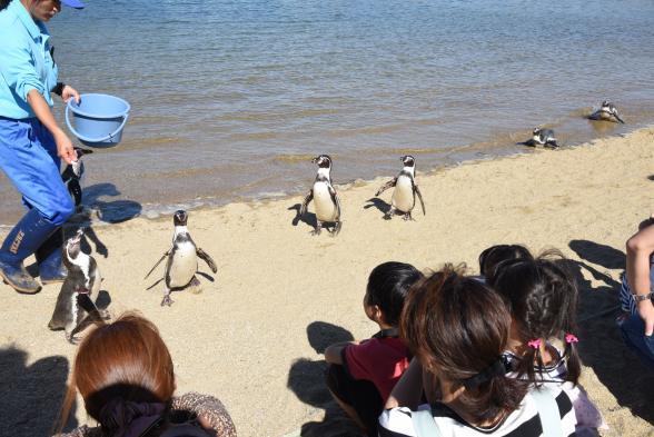 長崎ペンギン水族館(ふれあいペンギンビーチ)
