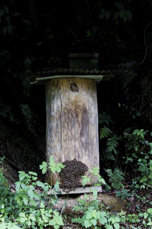 蜂洞(対馬市)