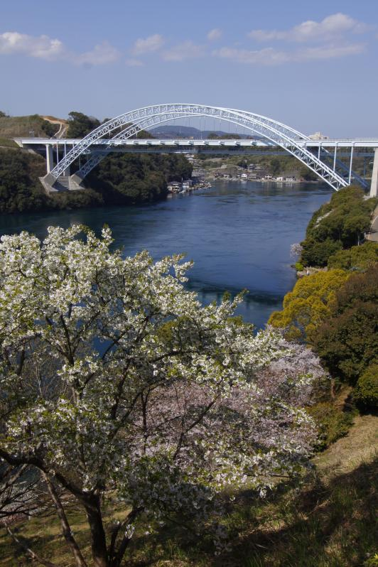 新西海橋(桜)