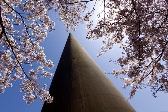 針尾無線塔(桜)5