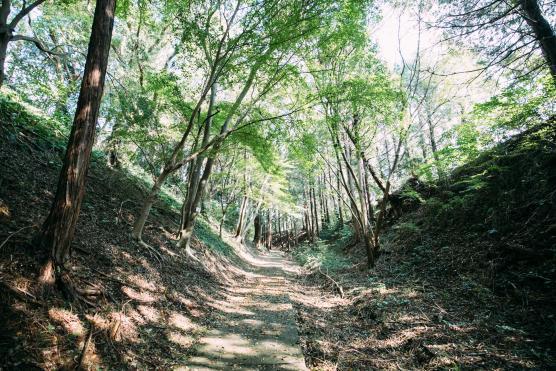 石原岳森林公園2