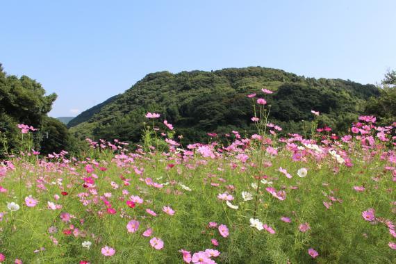 長尾城公園6