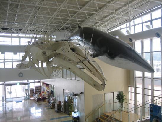 鯨賓館ミュージアム3