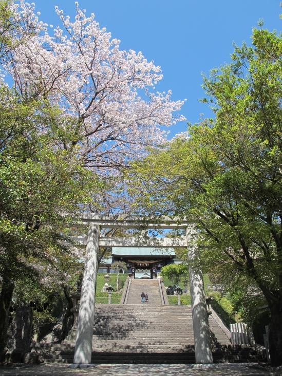 諏訪神社(桜)2