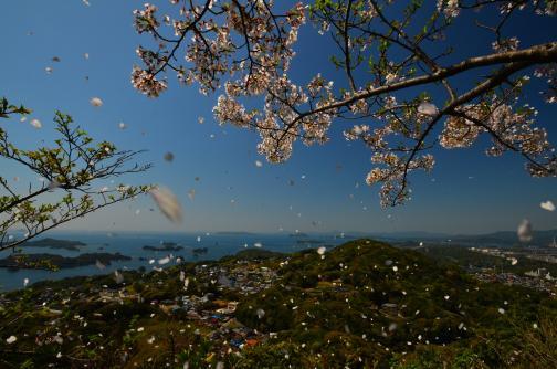 桜ふぶき©SASEBO