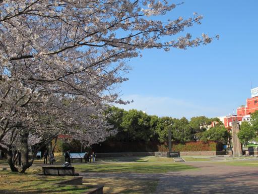 原爆落下中心地の桜2