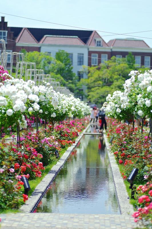 ハウステンボスのバラ祭り©SASEBO