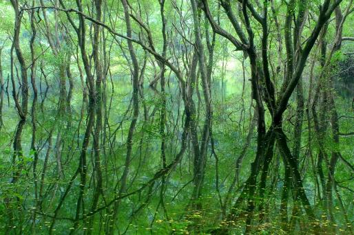 幻の五蔵大池©SASEBO