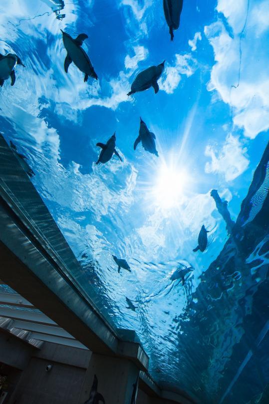 ペンギン、空を飛ぶ!©SASEBO