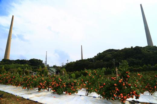 針尾島のみかん畑©SASEBO