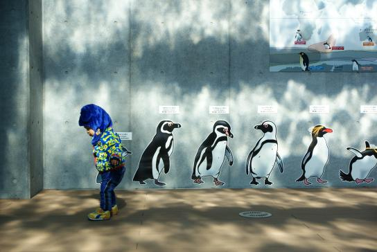 新種のペンギン!?©SASEBO