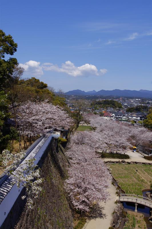 大村公園(桜)5