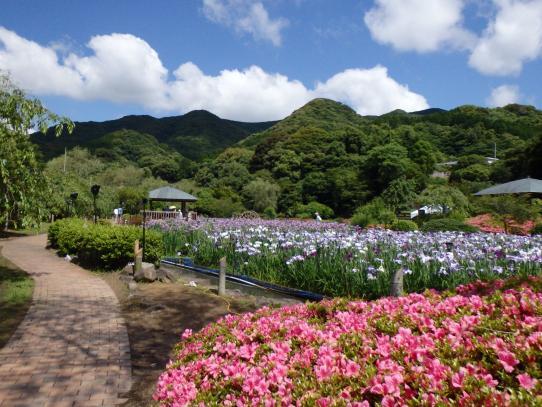皿山菖蒲園1