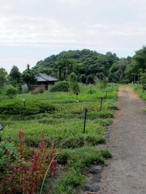 旧島原藩薬園跡1