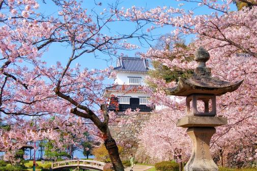 大村公園の桜