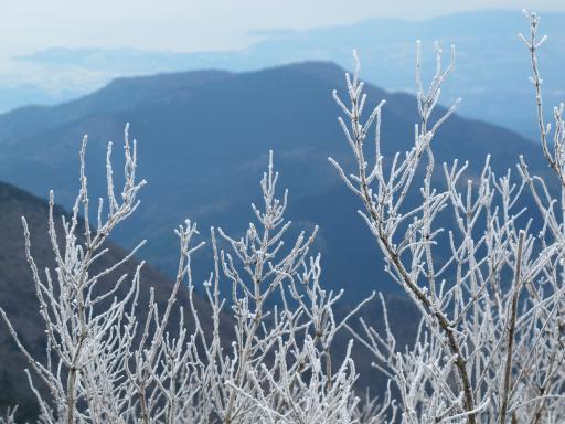 雲仙の霧氷(妙見岳)1