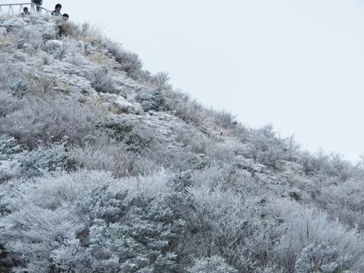 雲仙の霧氷(妙見岳)2