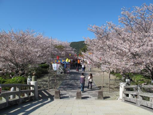 橘公園(桜)4