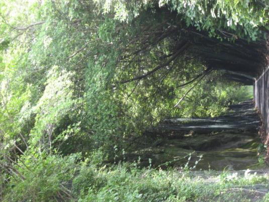緑のトンネル2