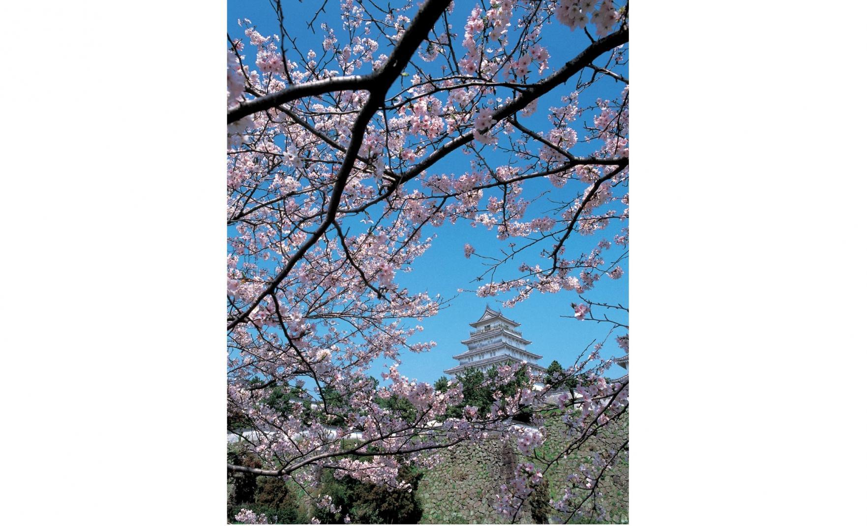 ◆島原城の桜-0