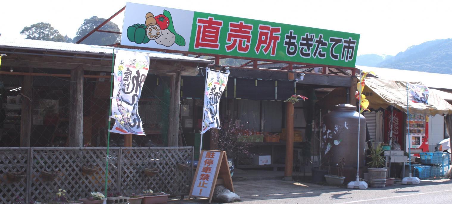 ◆幻の唐比れんこん(諫早市森山町)-0