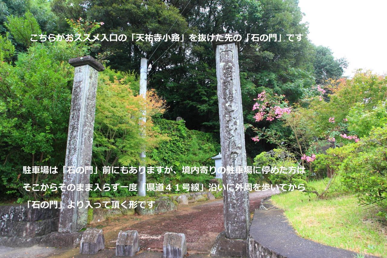美しい銀杏の絨毯「天祐寺」-7