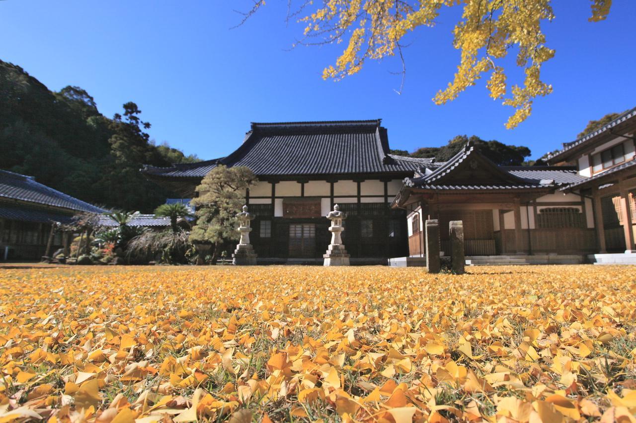 美しい銀杏の絨毯「天祐寺」-0