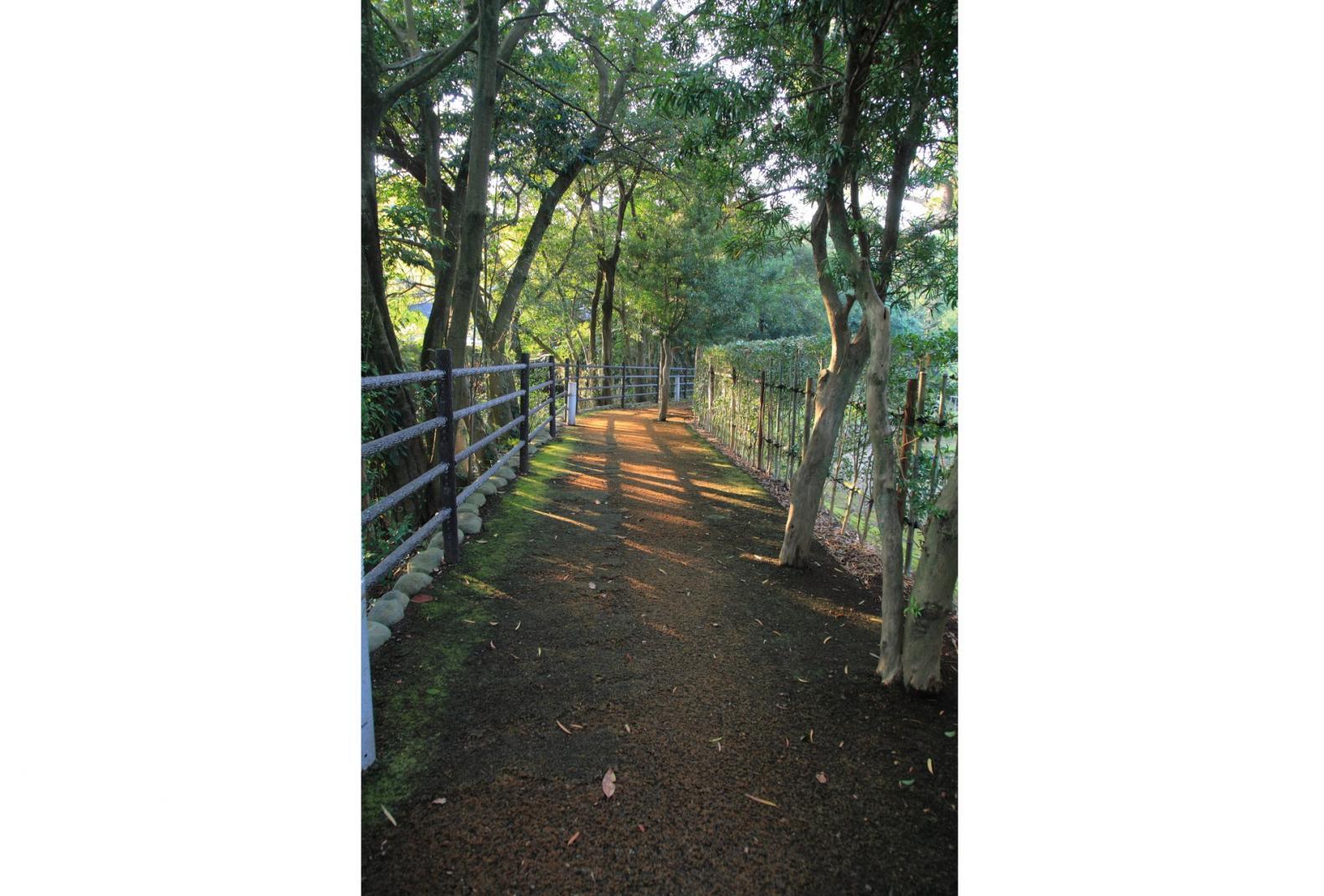水と、光と、緑が美しい諫早自慢の散策路「高城回廊」-1