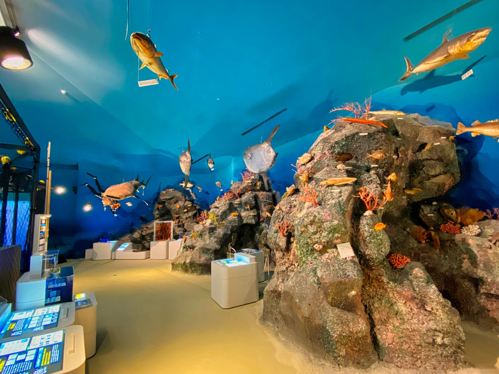 魚と漁業の展示室「フィッシャーマンズアリーナ」-5