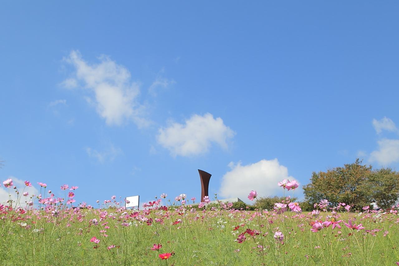 約20万本のコスモスが咲き乱れる「白木峰高原」-4