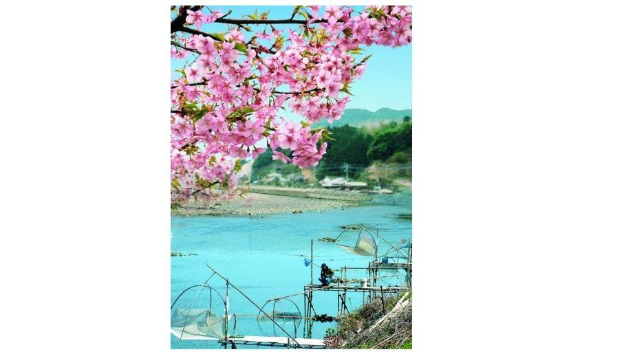 河津桜・シロウオまつり①(体験編)-1
