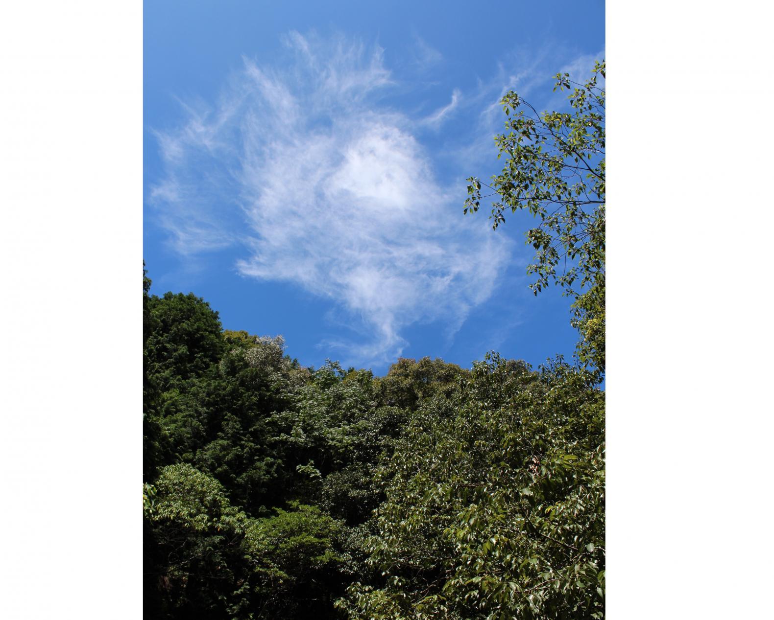夏の涼スポット!つがね落としの滝&岩背戸渓谷-1