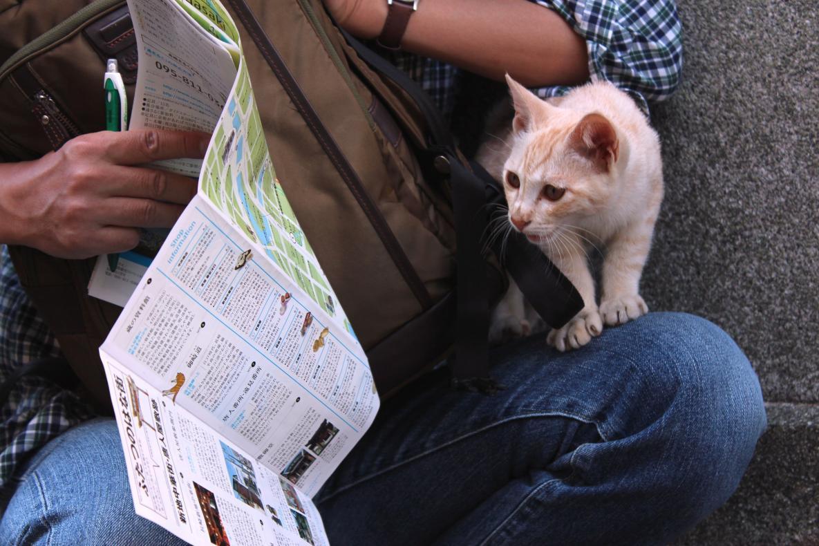 今日は猫の日 長崎の尾曲がり猫って、どんな猫にゃ?-1