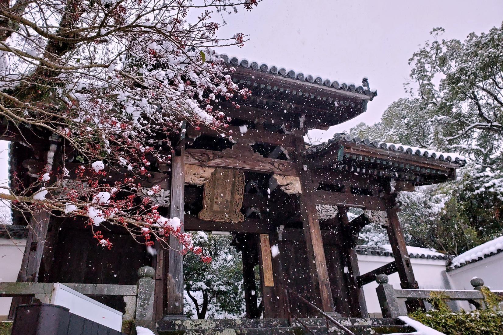 大雪の長崎 聖福寺-1
