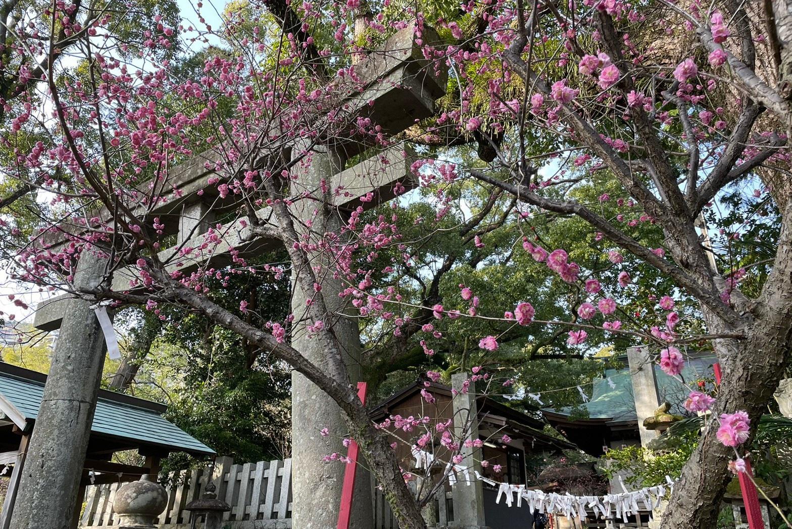 松森神社(松森天満宮)-1