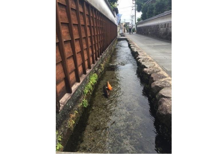 【3日目】島原湧水散策-1