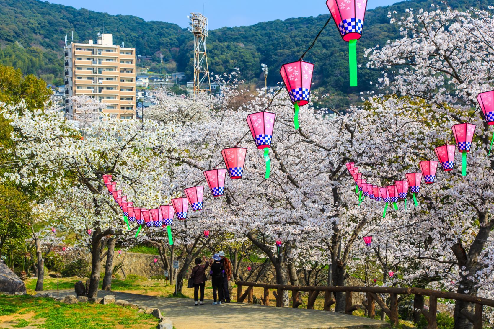 立山公園の桜(長崎市)-1
