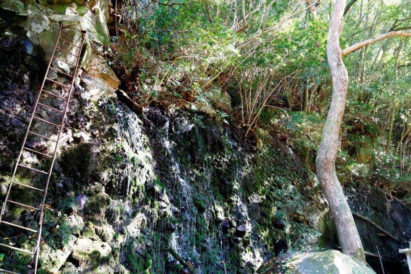 黄金に輝く 丸尾の滝-1