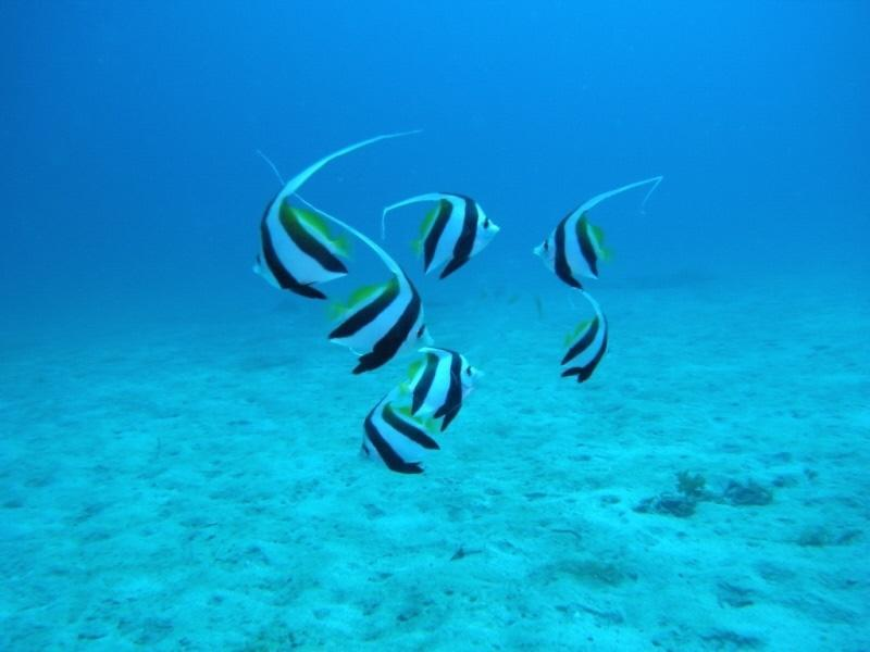 Goto Diving Experiences-1