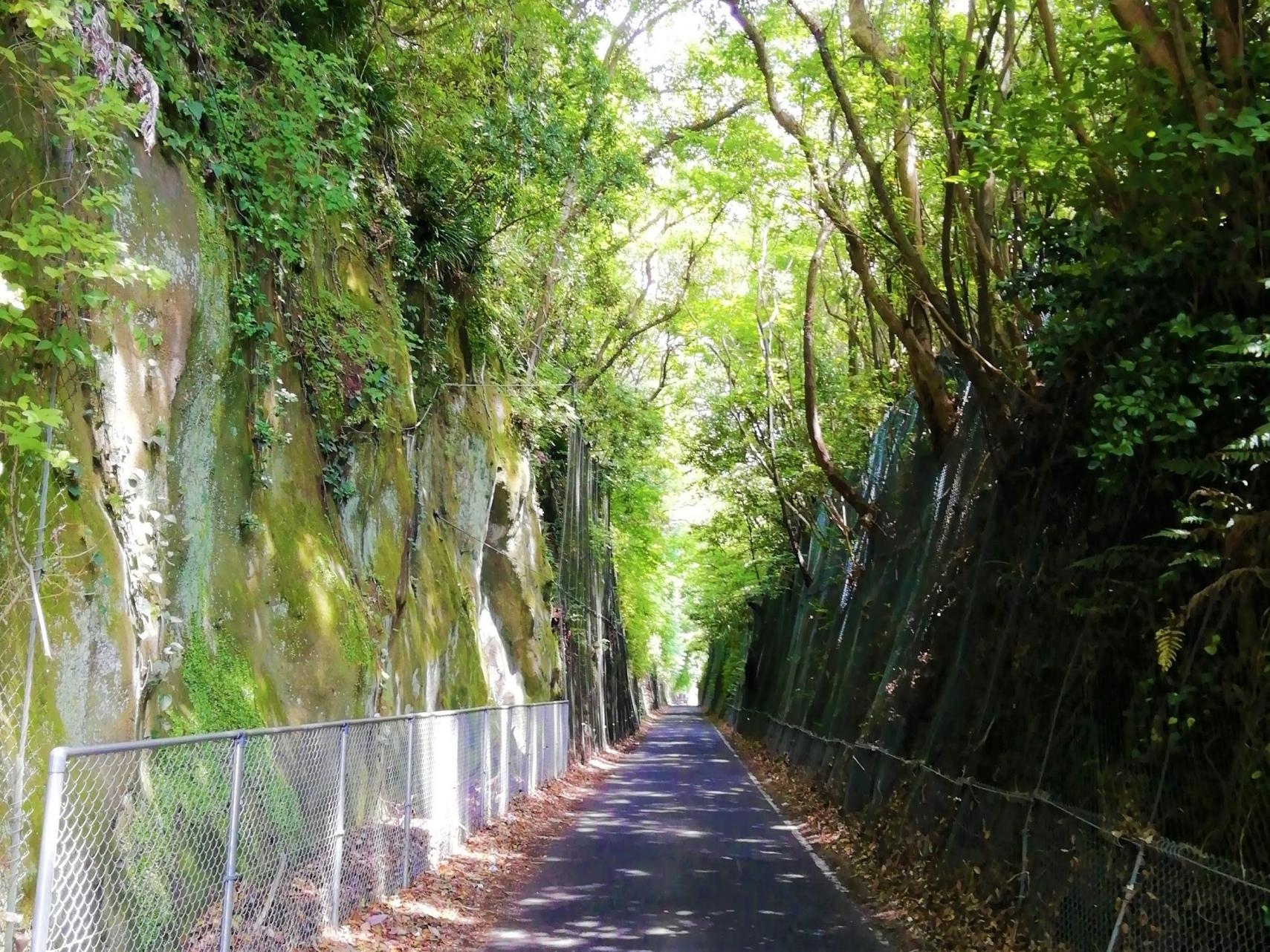 緑のトンネル-1