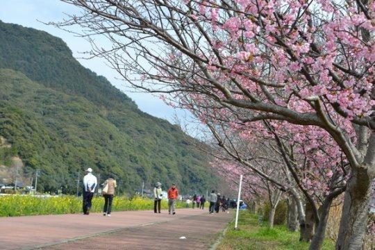 【2日目】河津桜ロード【春限定】-1