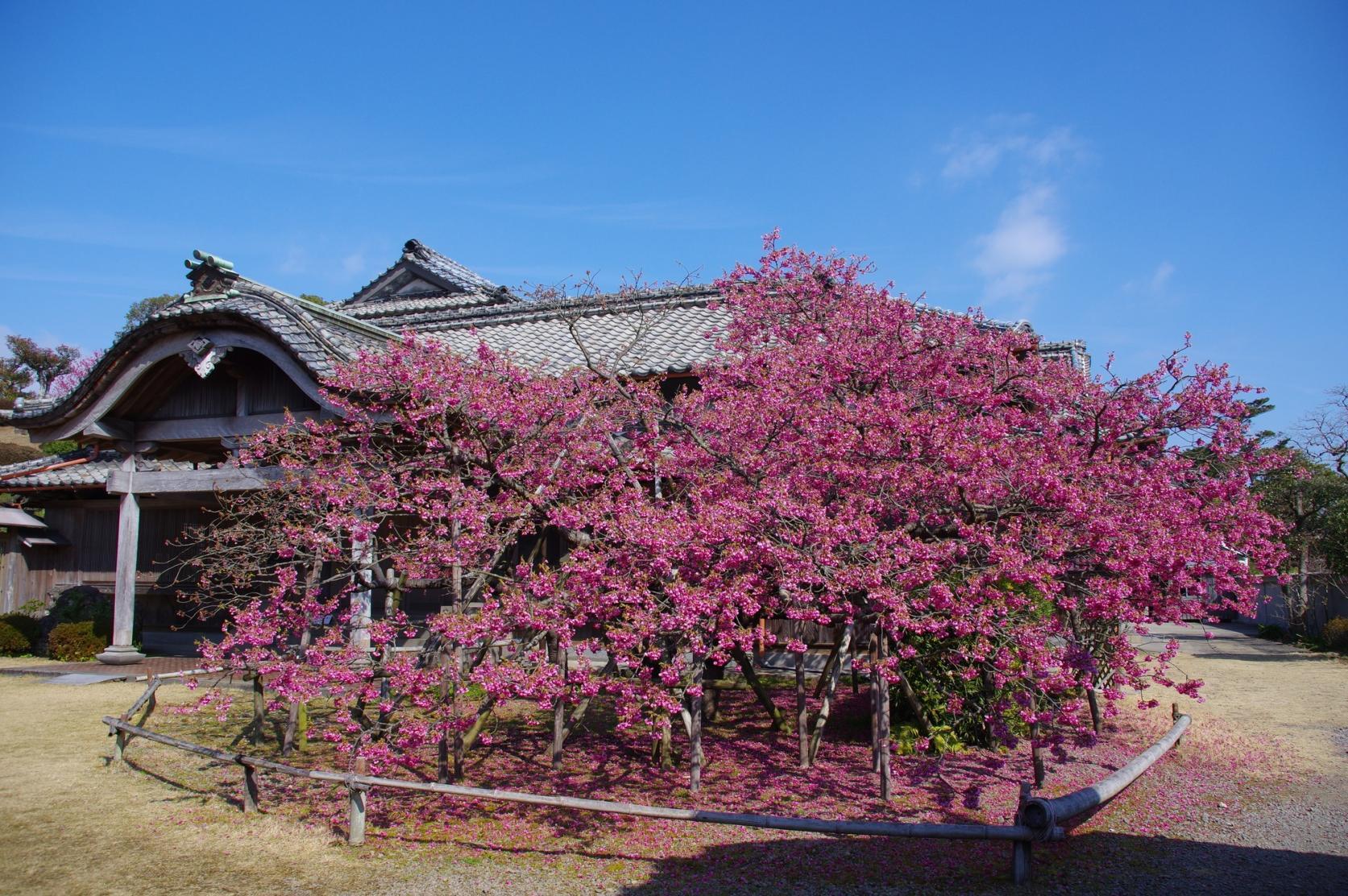 【1日目】国見神代小路歴史文化公園鍋島邸-1