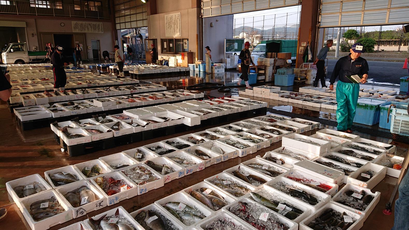 長崎の島々で楽しめる新鮮なお魚、一挙紹介いたします!-1