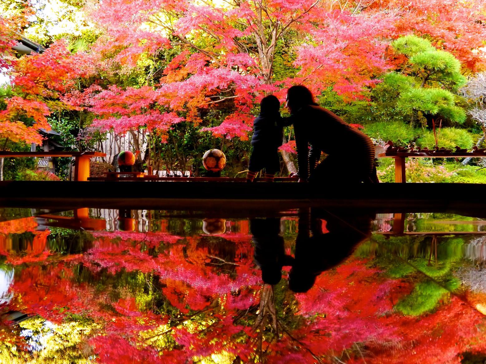 まるで絵を切り取ったような美しさ「寿福寺の逆さ紅葉」(佐世保市)-0