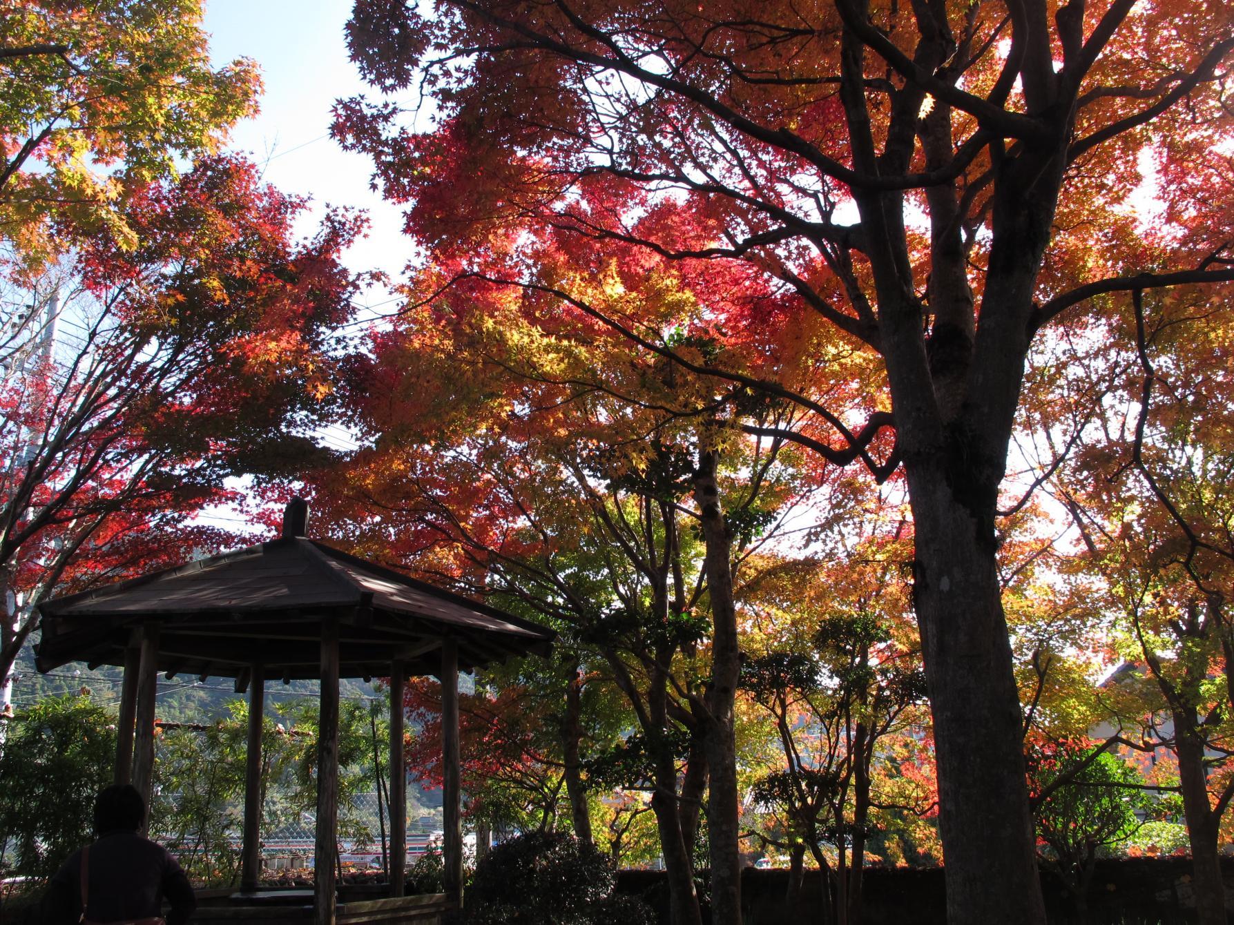 植木の里にある、見事な庭園「迎仙閣」(長崎市)-1