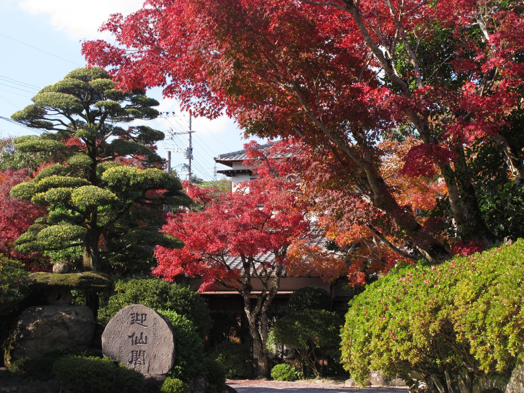 植木の里にある、見事な庭園「迎仙閣」(長崎市)-2