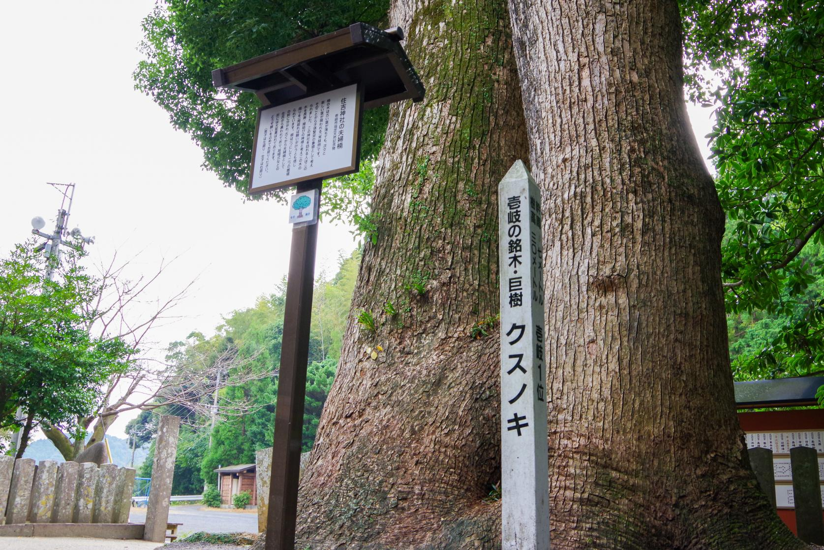Sumiyoshi Shrine with a Fufu Kusu (Married Couple camphor Tree) That Makes Your Wishes Come True-4